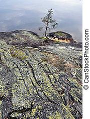 Pine on rock near the lake.