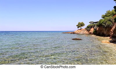 Pine on stone ledge. Sithonia peninsula. Northern Greece.