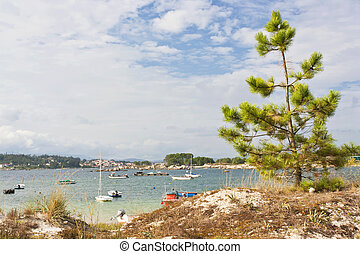Pine on the coastal dune