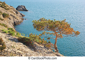 Pine on the edge of sea