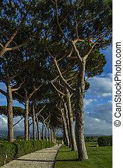 Pine road. Roads between the trees