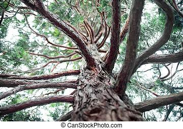 Pine bottom view