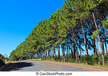 Pine the road