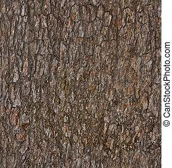 pine-tree, 樹皮
