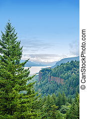 Pine Tree and Columbia River Gorge