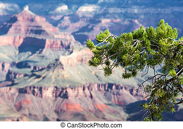 Pine Tree and Grand Canyon