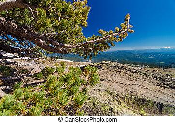 Pine Tree and Horizon