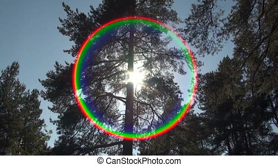 Pine-tree and sun