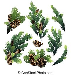 Pine tree branches and cones. Christmas design. Vector...