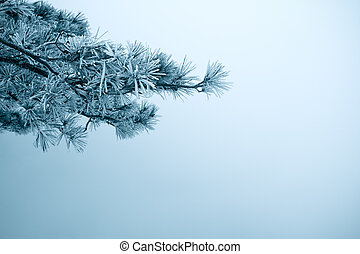 pine tree branches in fog winter