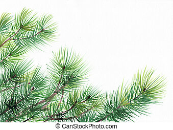 Pine tree branches isolated on white background. Original watercolor painting.