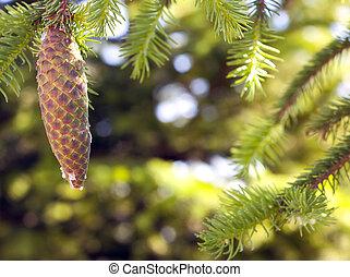 Pine tree cone oleoresin turpentine green blurred background