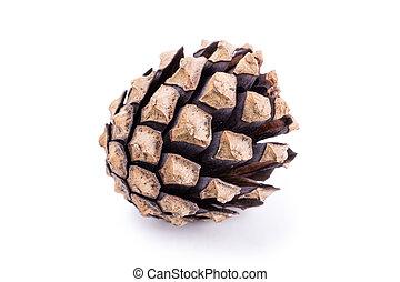 Pine tree cone on white background
