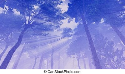 Pine tree crowns and mystic lights cinemagraph 4K - Foggy...