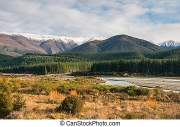pine tree forest at Wairau river, South Island, New Zealand