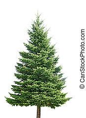 Pine Tree - Fresh pine tree isolated on white background