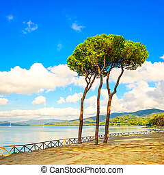 Pine tree group on the beach and sea bay background. Punta...