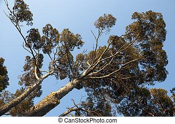 Pine tree growing toward skys