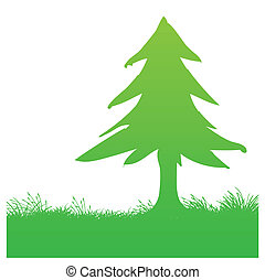 pine tree - vector illustration of a pine tree