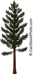 Pine tree vector from hand drawing