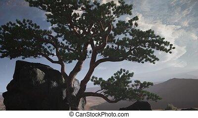 pine tree in a sand desert