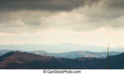 Pine tree in mountains in a landscape. - Pine green, swaying...