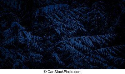 Pine Tree In Snowfall At Night
