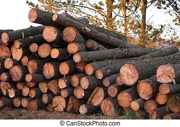 Pine Tree Logs