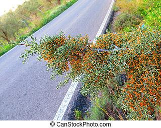 Pine tree near roadside