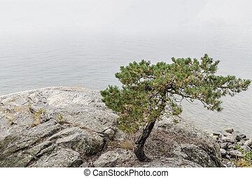 Pine tree on a calm lakeshore