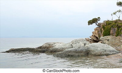 pine tree on a rock above the sea