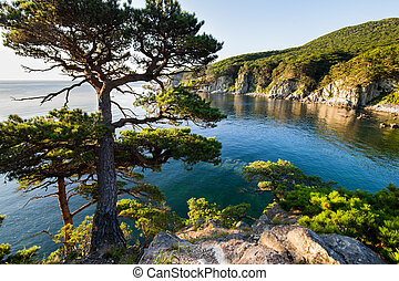 Pine-tree on a rock at the sea