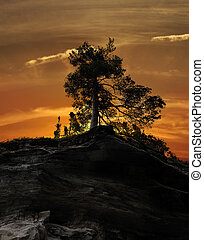 Tree On A Rocky Cliff