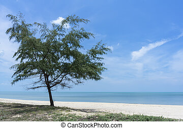 Pine tree on the beach with sky background.
