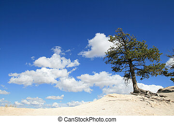 pine tree on the edge