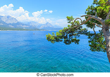 Pine tree on the Mediterranean Sea in Kemer