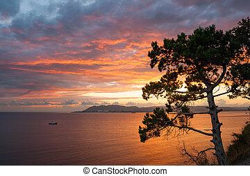 Pine tree over sea on fire sunset