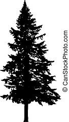 Pine tree silhouette isolated on white background