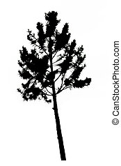 pine tree silhouette on white background