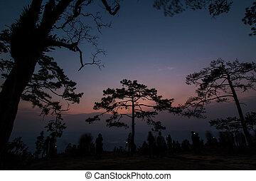 Pine tree silhouette