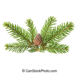 Pine tree sprig with cone isolated on white background