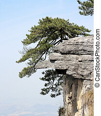 pine tree stand towering on the cliff in lushan, China