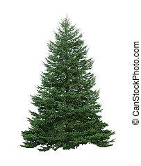 Pine Tree - Single pine tree isolated on white background
