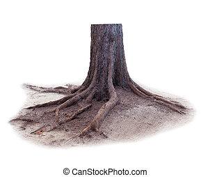 pine tree stump isolated white background