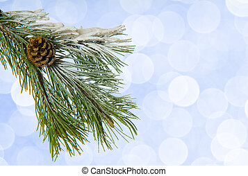 Pine tree twig on the blue background