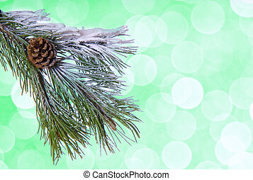 Pine tree twig on the green background