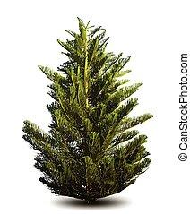 pine tree. Vector background