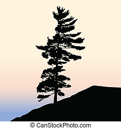 Pine Tree - A lone pine tree silhouette on a hill.