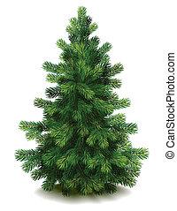 Pine tree - Vector illustration - pine tree on white...