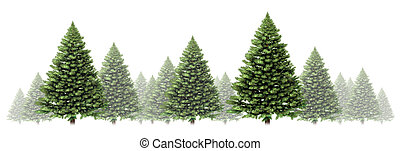 Pine tree winter border design with a group of green Christmas trees on a white background as a festive evergreen forest element with fog and snow for the holiday season including New Year.